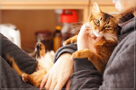 抱っこ好き猫・ソマリ