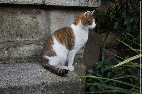 柳森神社の猫.jpg