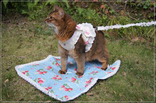 手作りカフェマットに乗る猫.jpg