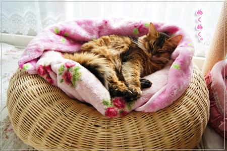 猫の天使モンさん.jpg