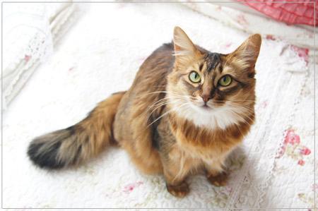 ソマリの猫モンさん.jpg
