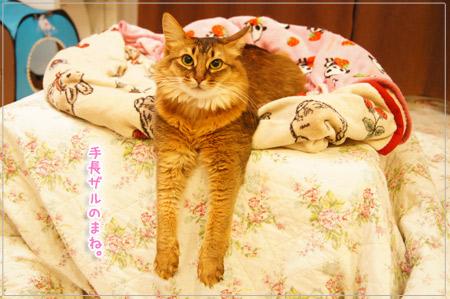 手長ザル猫.jpg