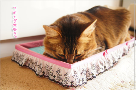 猫は爪とぎ好き.jpg