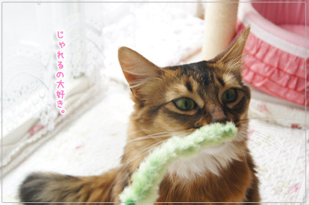 じゃれ猫.jpg