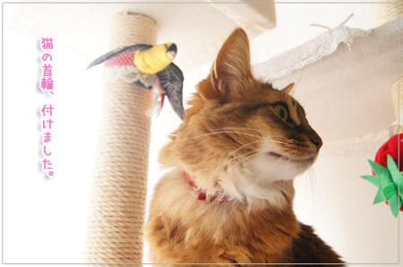 猫の首輪.jpg