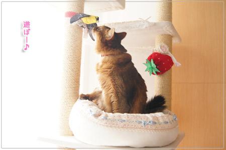 気になる猫.jpg
