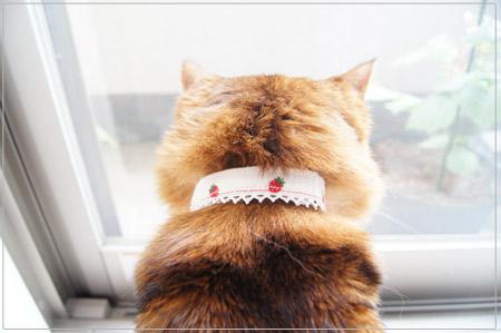 手作りの猫首輪してるモンさん.jpg
