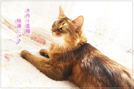 快適な猫首輪.jpg