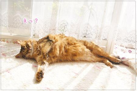 東京メトロの猫のマネをするモンさん.jpg