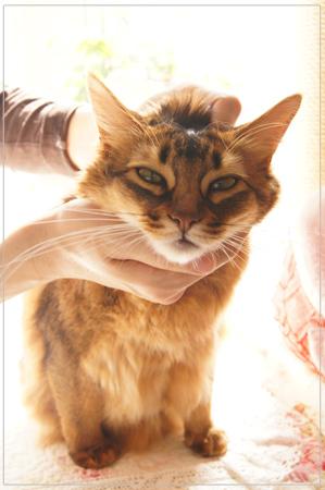 とろける猫.jpg