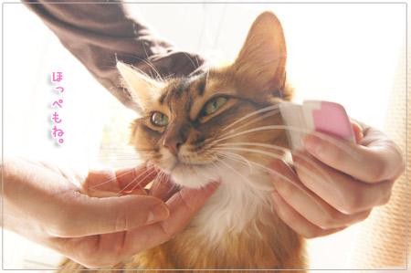 猫のほっぺ.jpg