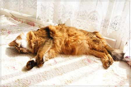 幸せそうな猫・モンさん.jpg
