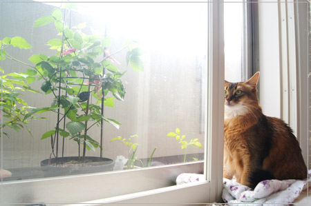 新緑の季節と猫のモンさん.jpg