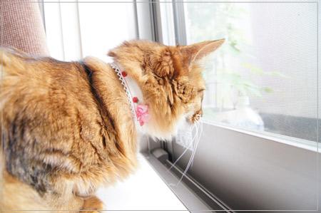 手作り猫首輪.jpg
