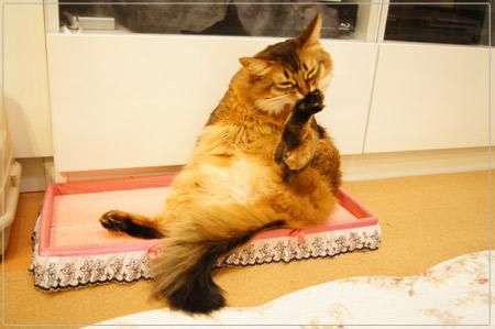 手を使う猫@毛づくろい.jpg