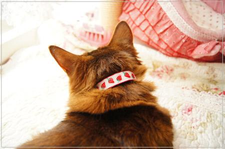 手作りリボン猫首輪を試着.jpg