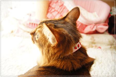 愛情たっぷり手作り猫首輪.jpg