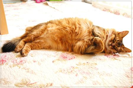 コットンキルトで寝るモンさん.jpg