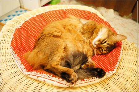 股にしっぽを挟んだまま寝る猫.jpg