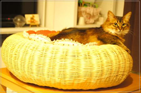 猫クッション大好き!.jpg