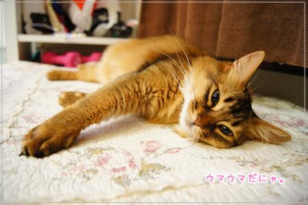 ソマリ・ルディの猫、モンさん.jpg