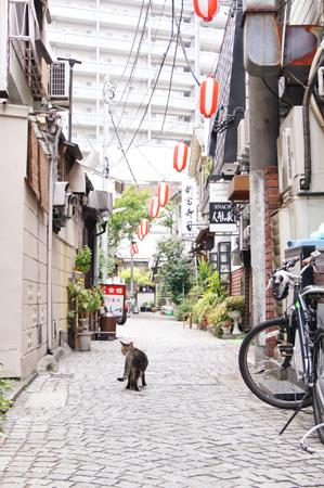 神楽坂の猫.jpg
