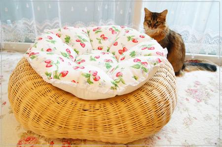 キャスキッドソン生地で作った猫クッションとモンさん.jpg