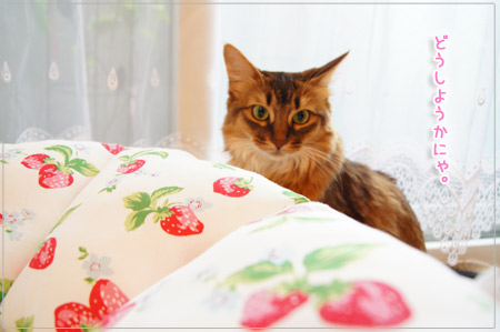 どうしようかにゃ@猫のモンさん.jpg