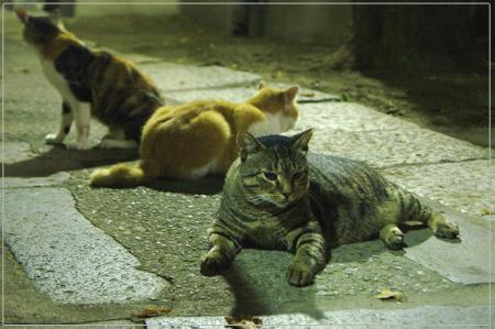 夜の猫の集会