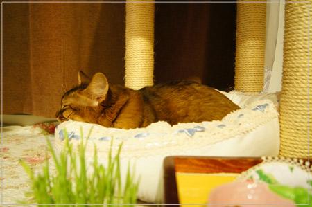 手作り猫ベットでお寝んね