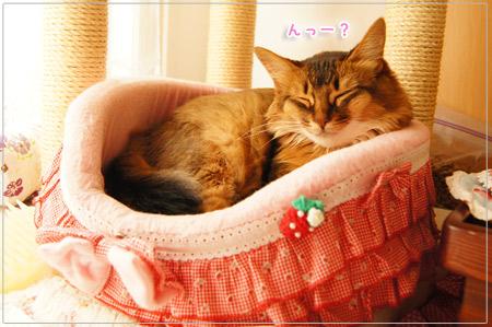 眠り姫@ソマリの猫モンさん