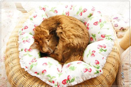 猫クッションで寝るモンさん