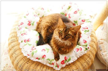 キャスキッドソンの猫用クッション