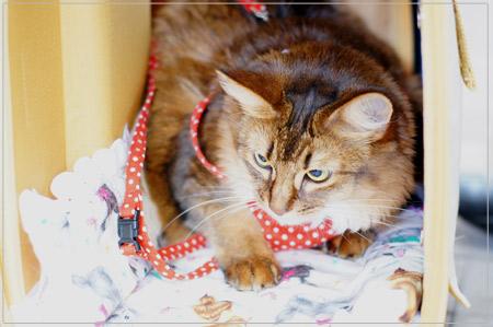 リバーシブル猫マットをモンさん使用中