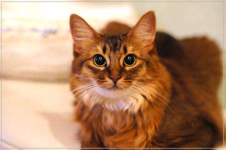 単焦点レンズで猫撮影