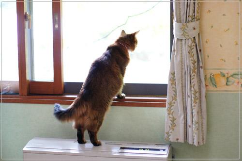 ソマリの猫モンさん・軽井沢プリマヴェーラにて@α55