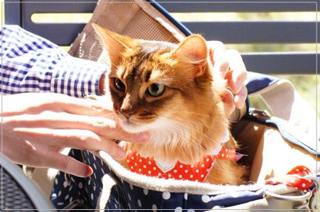 何かをみつけた猫のモンさん