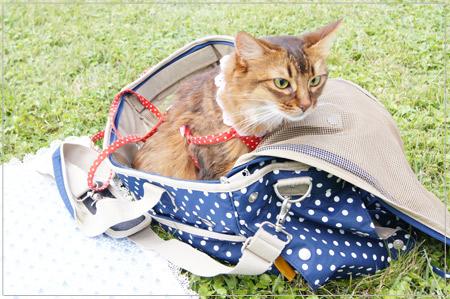 軽井沢プリンス・アウトレットの芝生と猫のモンさん