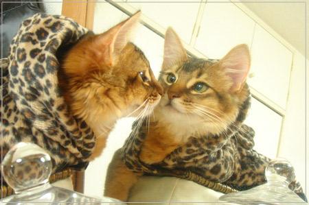鏡の中の猫のモンさん