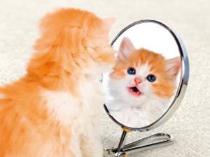 東京メトロ・こんな人を見た・鏡の中の仔猫