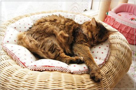 猫ソファ.jpg