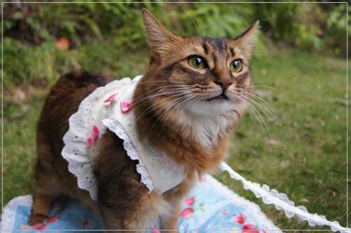 森ガール猫.jpg