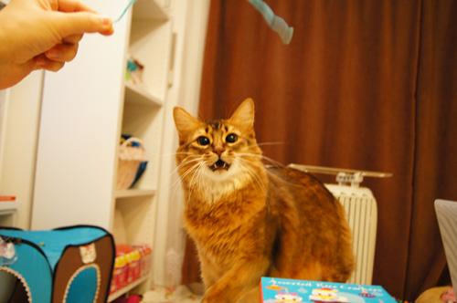 ソマリ猫遊び.jpg