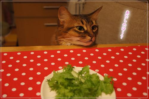 ソマリ 猫