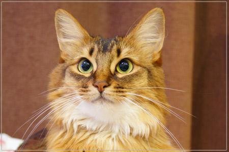 歯磨きでキレイになった猫モンさん