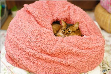 羊毛毛布にくるまったモンさん