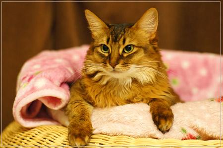 猫ソファにて
