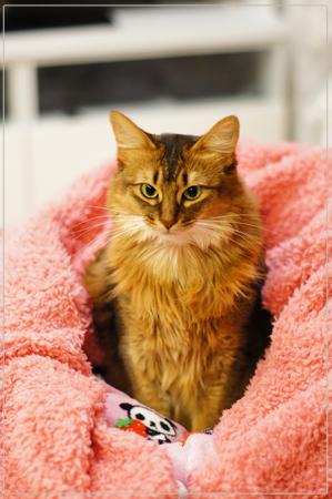 うつむき猫顔