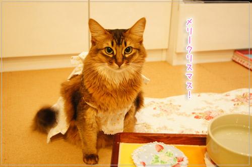 ソマリの猫モンさんのクリスマス.jpg