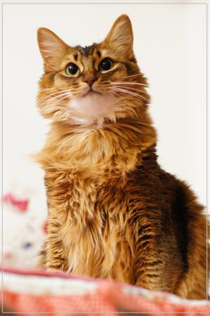 美猫モンさん
